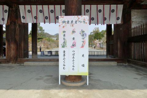 仁和寺/桜の開花状況