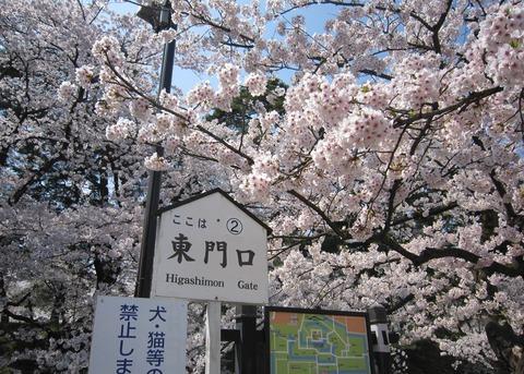 弘前城の桜 (2)