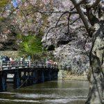 桜を見に京都へ…いや、彦根にしよう!