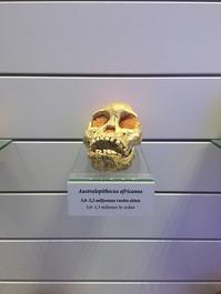ヘルシンキ自然史博物館 (11)