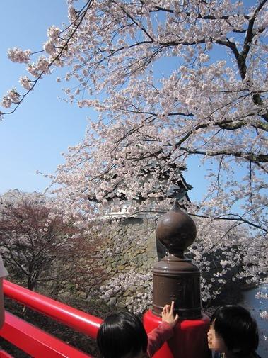 弘前城の桜 (14)