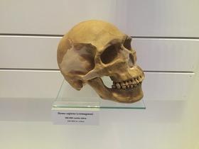 ヘルシンキ自然史博物館 (10)