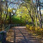 【ベートーヴェンの散歩道】を歩いてみた!紅葉映えるウィーン郊外ハイリゲンシュタットを尋ねて