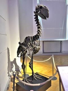 ヘルシンキ自然史博物館 (8)