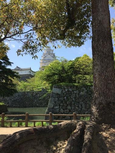 姫路城 平成の大改修 (15)