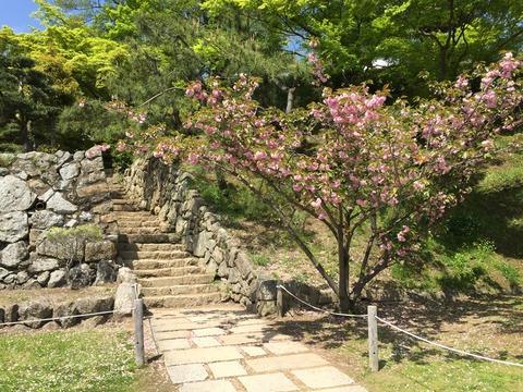 姫路城 平成の大改修 (7)