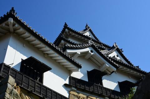 彦根城 桜 (13)