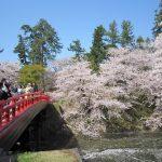 日本有数の桜の名所「弘前城」、今年はGWまで満開を保てるか?