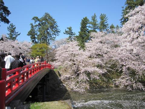 弘前城の桜 (17)